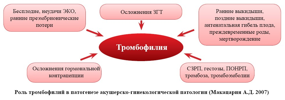 Питание беременной при тромбофилии 57